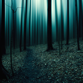 the forest 2 by jeremy vandermeer (jerr6)) on 500px.com