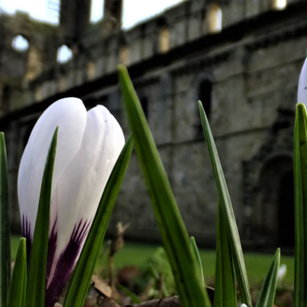 Spring arrives at the Abbey