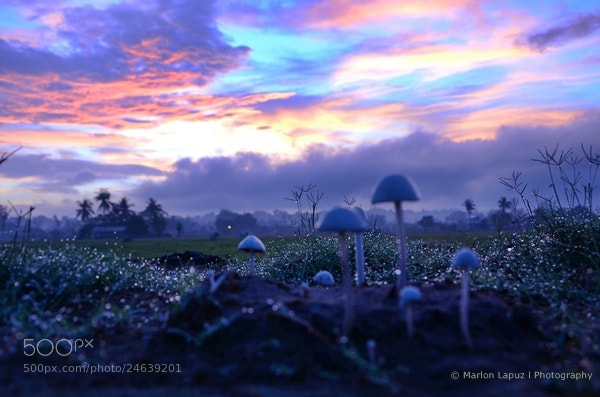 Photograph Sprouted Morning by MARLON LAPUZ on 500px