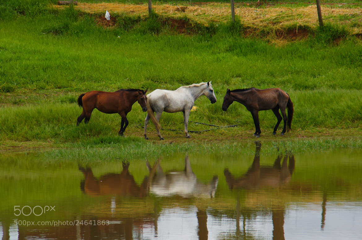 Photograph Caballos by Don Chachi on 500px