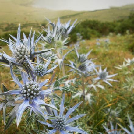 Blu flowers, Nikon COOLPIX S3300