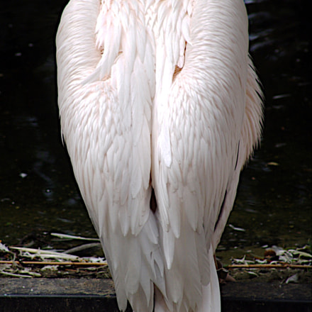 The Pelican Grief, Sony DSC-F828