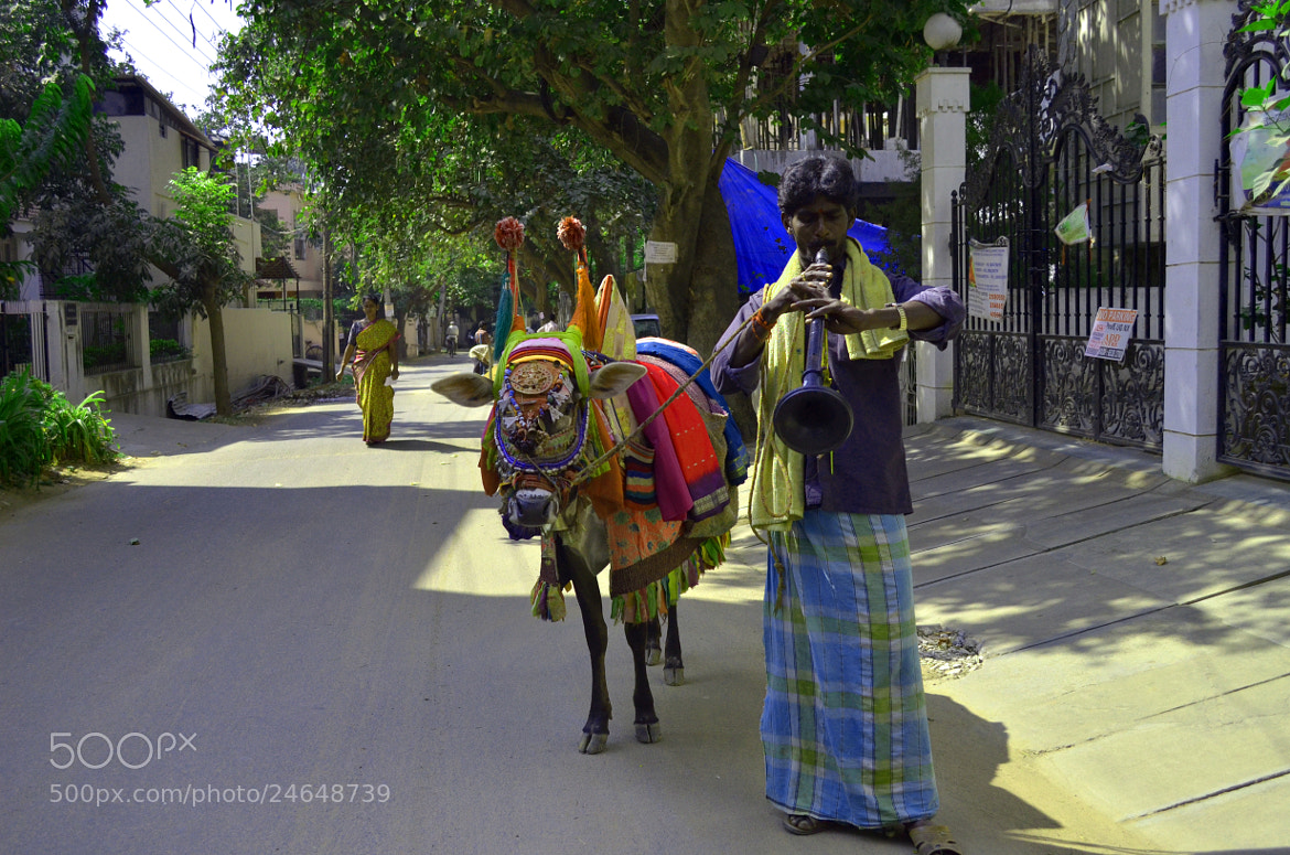 Photograph A dressed cow in our street by Ajan Ajanthan on 500px