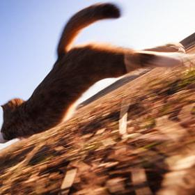 Rush! by Seiji Mamiya on 500px.com