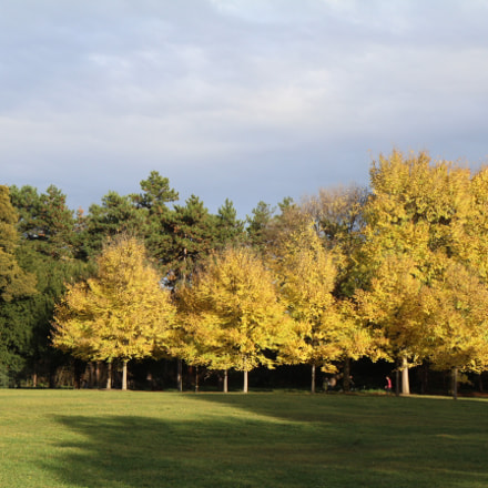 Fall at the Parc, Canon EOS 600D, Canon EF-S 17-55mm f/2.8 IS USM
