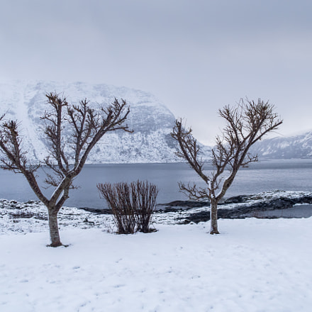 Winter by the fjord, Canon POWERSHOT G5 X