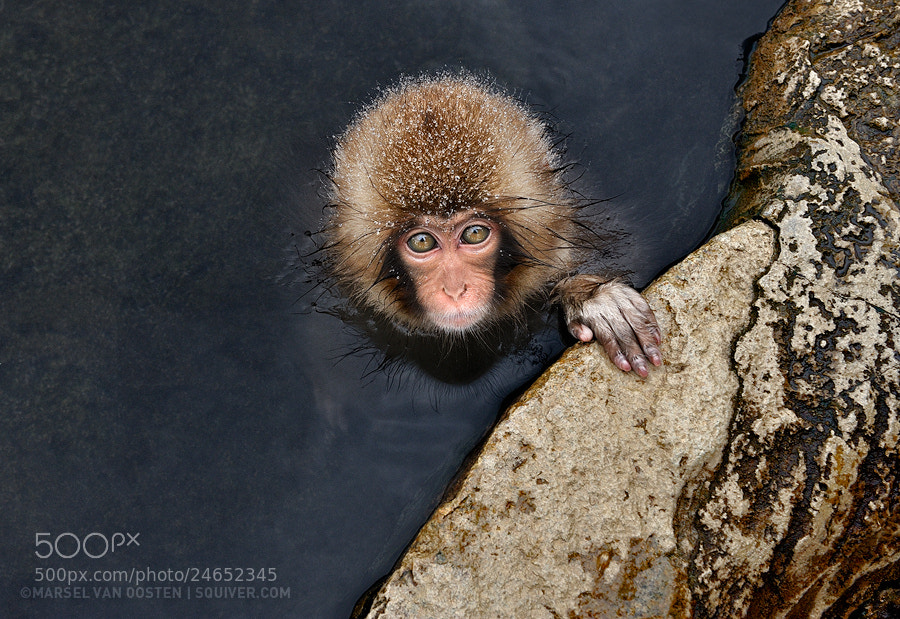Photograph Little Guy by Marsel van Oosten on 500px