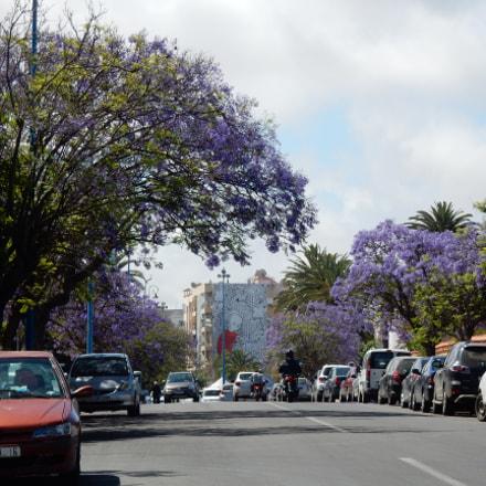 Purple trees... blue sky, Nikon COOLPIX S9700