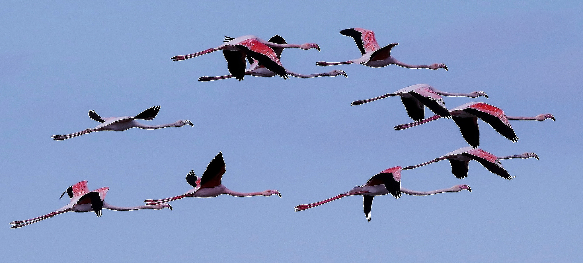 Photograph Snobs Formation by Avi Ben-Har on 500px
