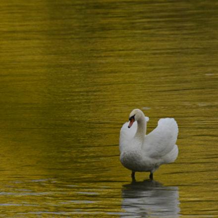 Yellow River, Nikon D7000, AF-S Nikkor 200-500mm f/5.6E ED VR