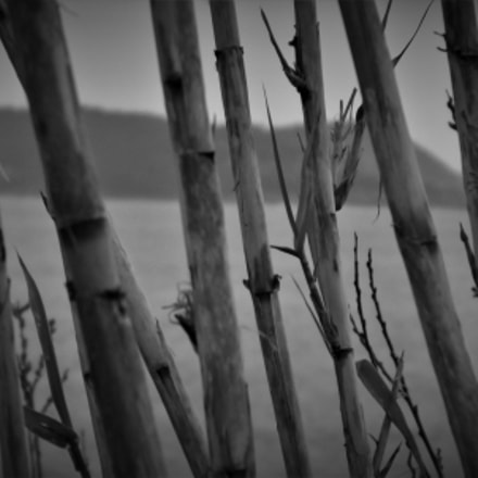 bambu, Fujifilm FinePix SL245