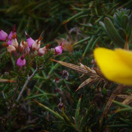 micro flower, Fujifilm FinePix SL245