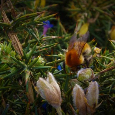 bee, Fujifilm FinePix SL245