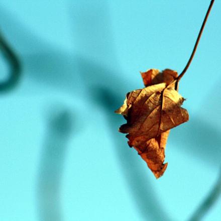 leaf2, Canon EOS 1000D