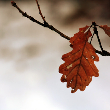 leaf3, Canon EOS 1000D
