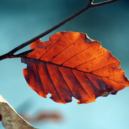 leaf4, Canon EOS 1000D, Canon EF 55-200mm f/4.5-5.6 II USM