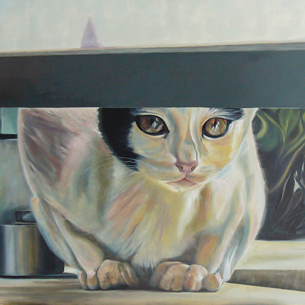 Cat eyes, Panasonic DMC-LZ2