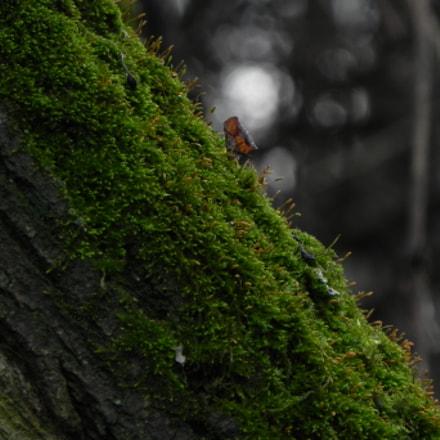 Leaf on a Mossy, Nikon COOLPIX P100