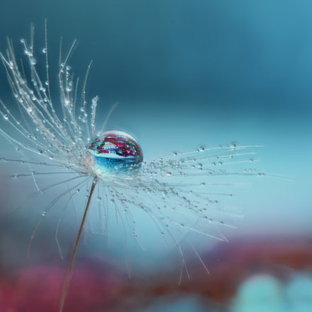 Droplets on a dandelion seed