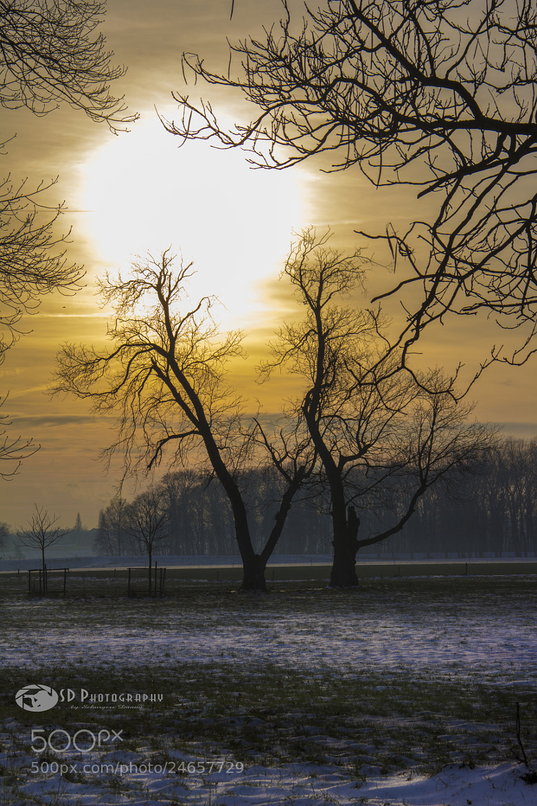 Photograph Wintersun by Danny schurgers on 500px