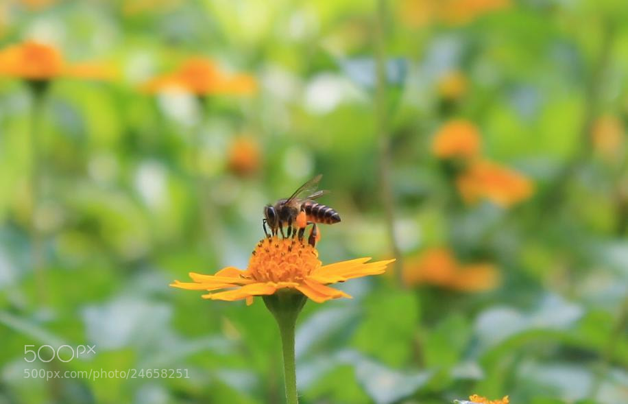 Photograph Busy Bee by Brijithlal SS on 500px