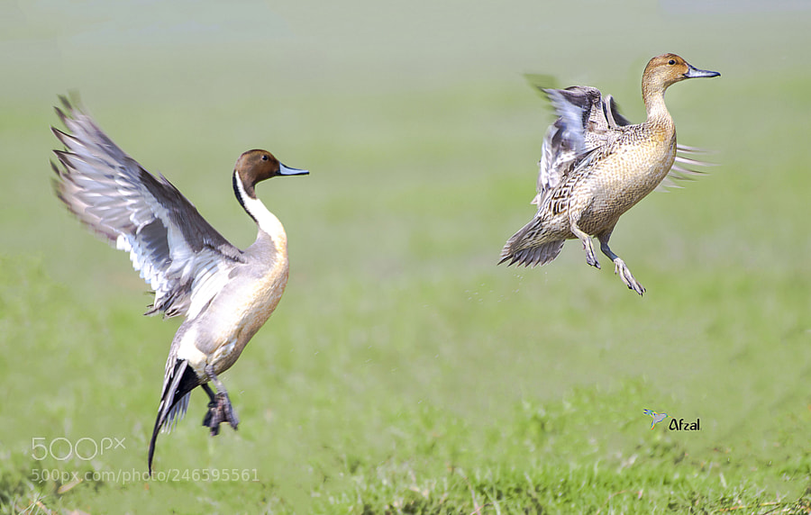 Vertical Take-off….