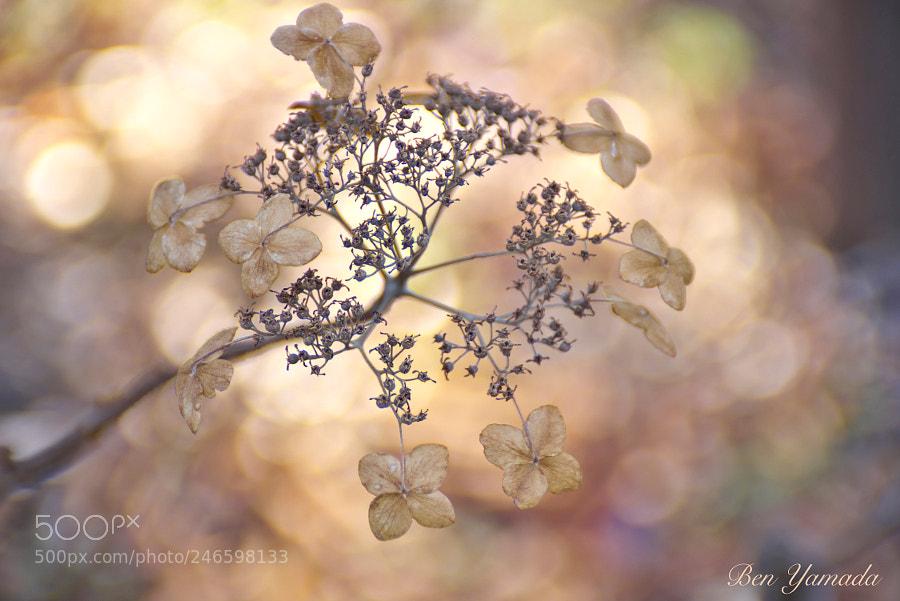 Color of winter flower 10 -Hydrangea-