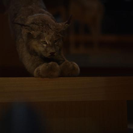Cat in the dark, Nikon D750, AF-S Nikkor 58mm f/1.4G