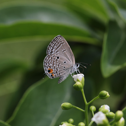 Butterfly on a flower, Canon EOS 70D, Canon EF 22-55mm f/4-5.6 USM