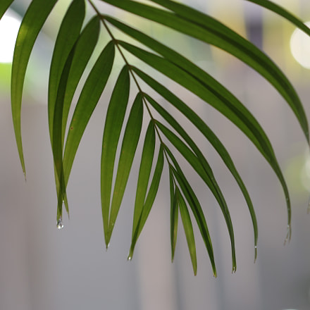 Rain drops on palm, Canon EOS 70D, Canon EF 22-55mm f/4-5.6 USM