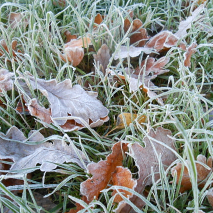 the first October frosts, Nikon COOLPIX S3200