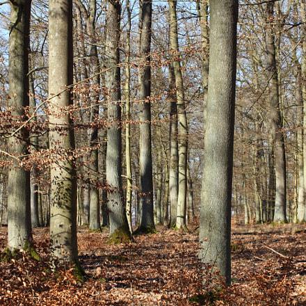 The Deciduous Trees, Canon EOS 5D MARK II, Canon EF 70-200mm f/4L
