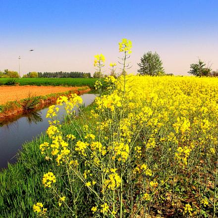 Paesaggio primaverile fiorito a, Fujifilm FinePix JX250