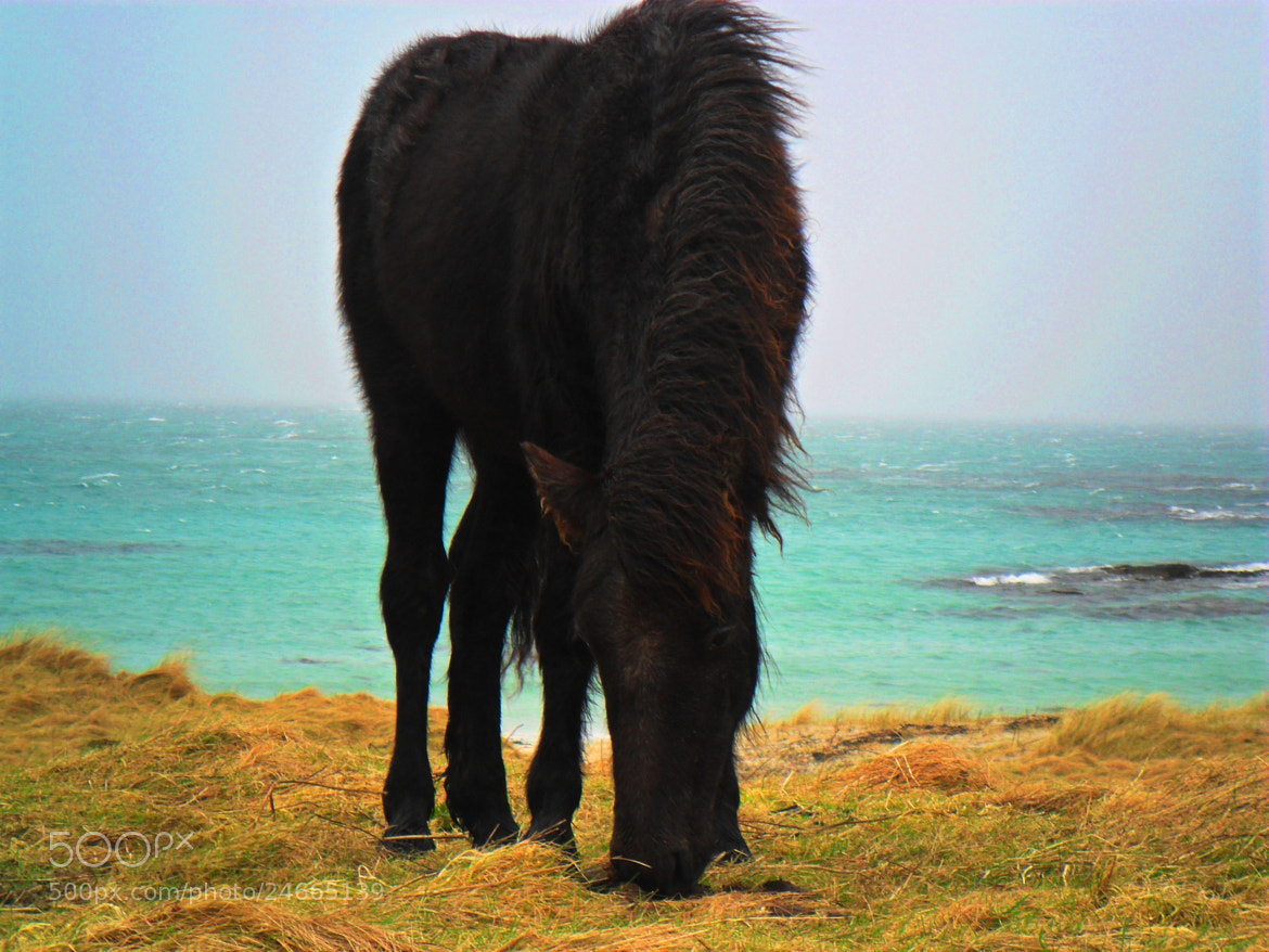 Photograph Foal - Isle of Eriskay 2012 by Jemma Brannigan on 500px
