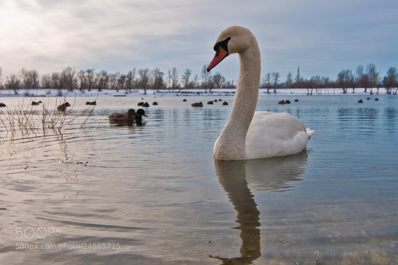 Photograph lake Zajarki (37) by Vlado Ferencic on 500px