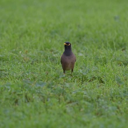The bird on the, Nikon D750, AF-S Nikkor 200-500mm f/5.6E ED VR