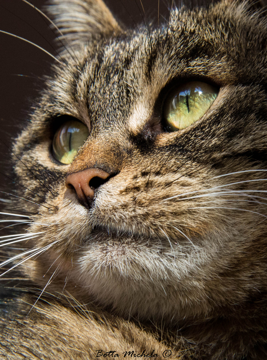 Photograph The cat is a living treasure by Michela Botta on 500px