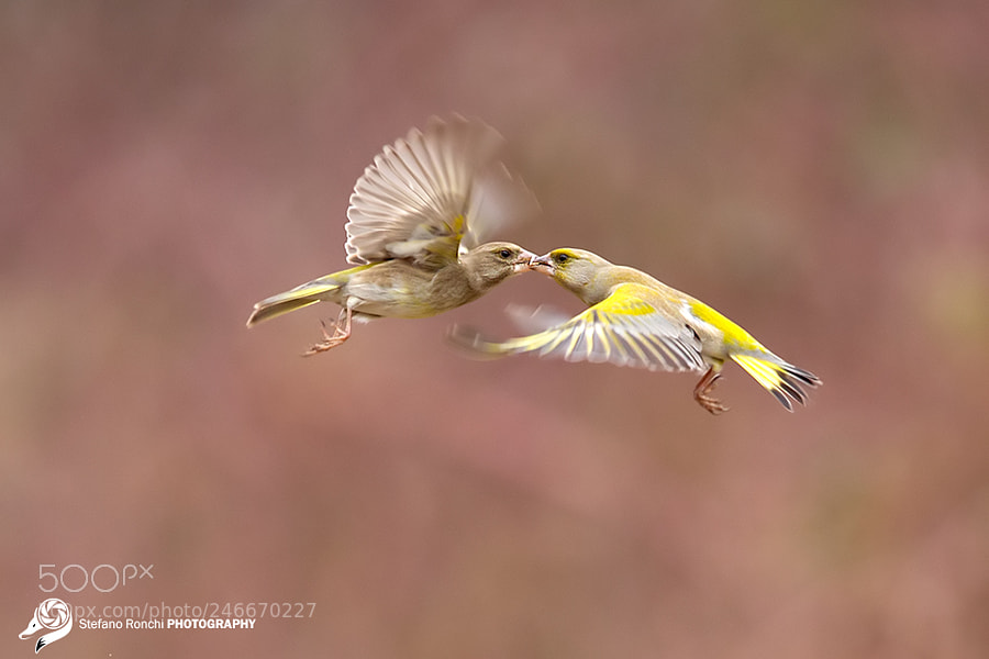 Flying kiss