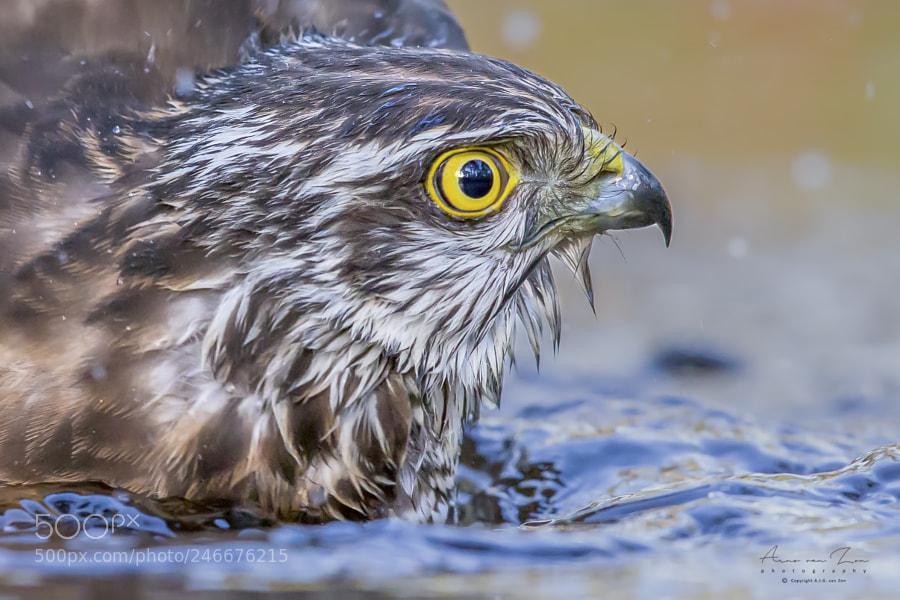 Bath-time...