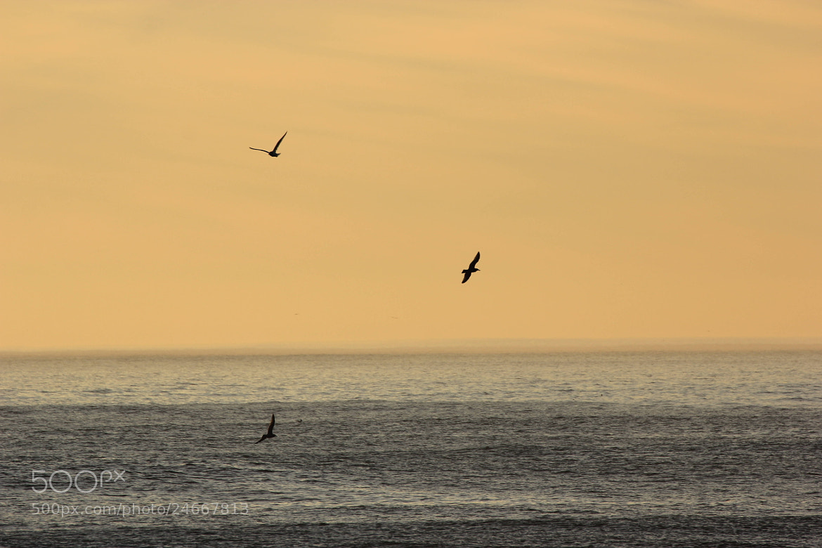 Photograph Flying into the sunset by James Roberts on 500px