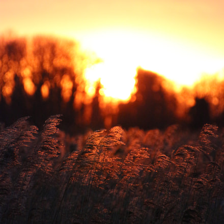Sunrise over reed-beds, Canon EOS 650D, Canon EF 300mm f/2.8L IS II USM
