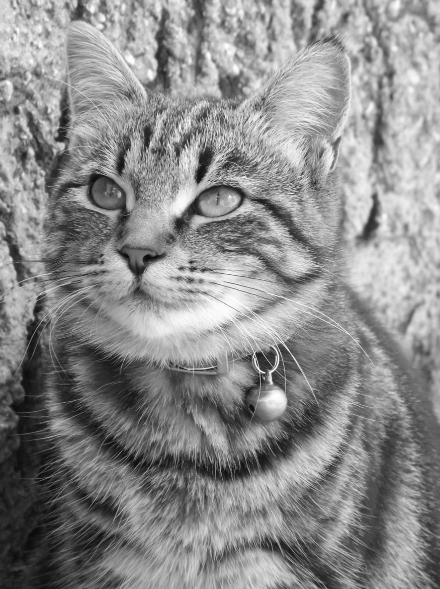 Photograph Minù black and white by Sara Duranti on 500px