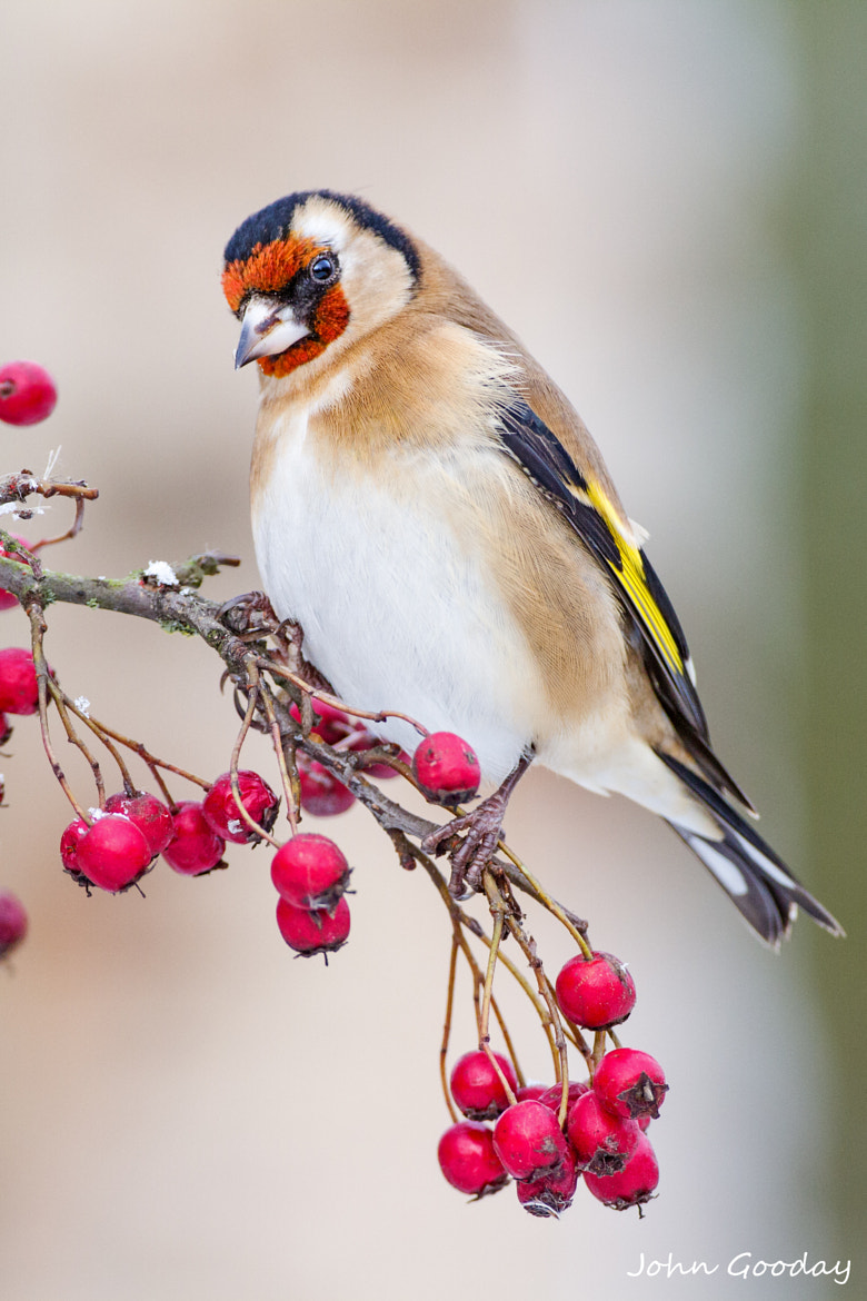 Photograph Winter feast by John Gooday on 500px