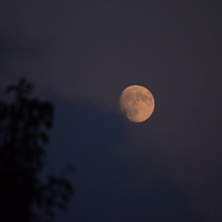 Luna, Nikon D5300, Sigma 70-300mm F4-5.6 APO DG Macro HSM