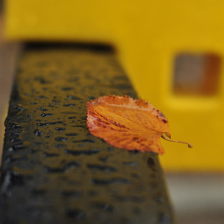 The Leaf, Nikon D90, AF Nikkor 50mm f/1.4D