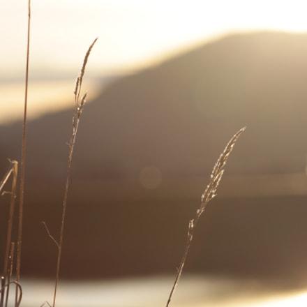 On the ridge, Canon EOS REBEL T1I, Canon EF 75-300mm f/4-5.6