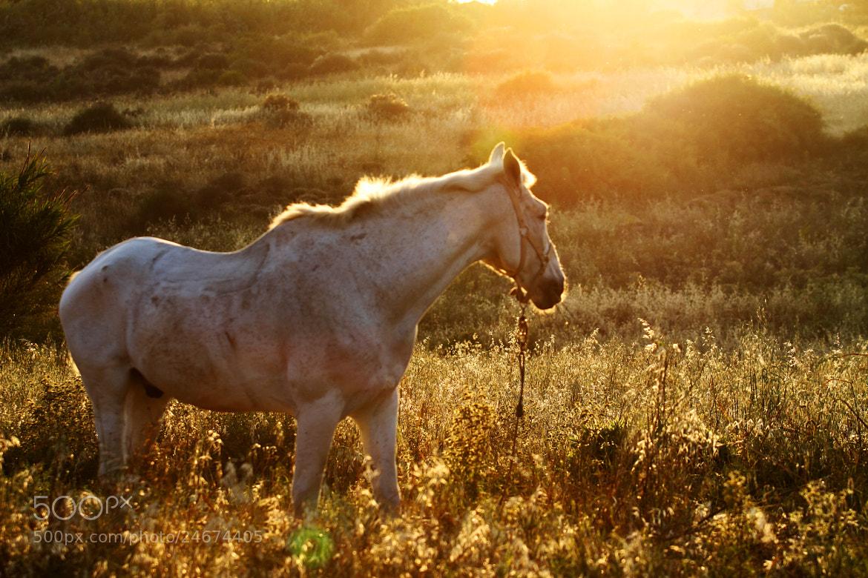 Photograph Galopa caballo, que la tierra es tuya by Francisco  Moreno Martin on 500px