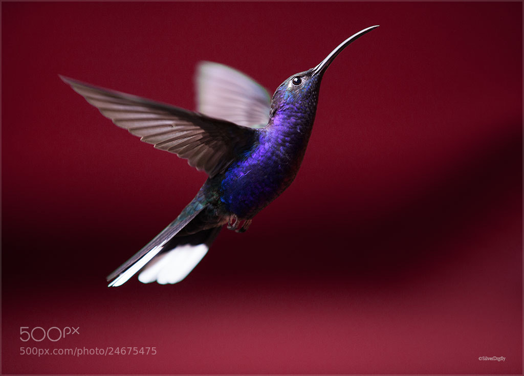 Photograph Purple Fly  by Ruth Mora Quesada on 500px