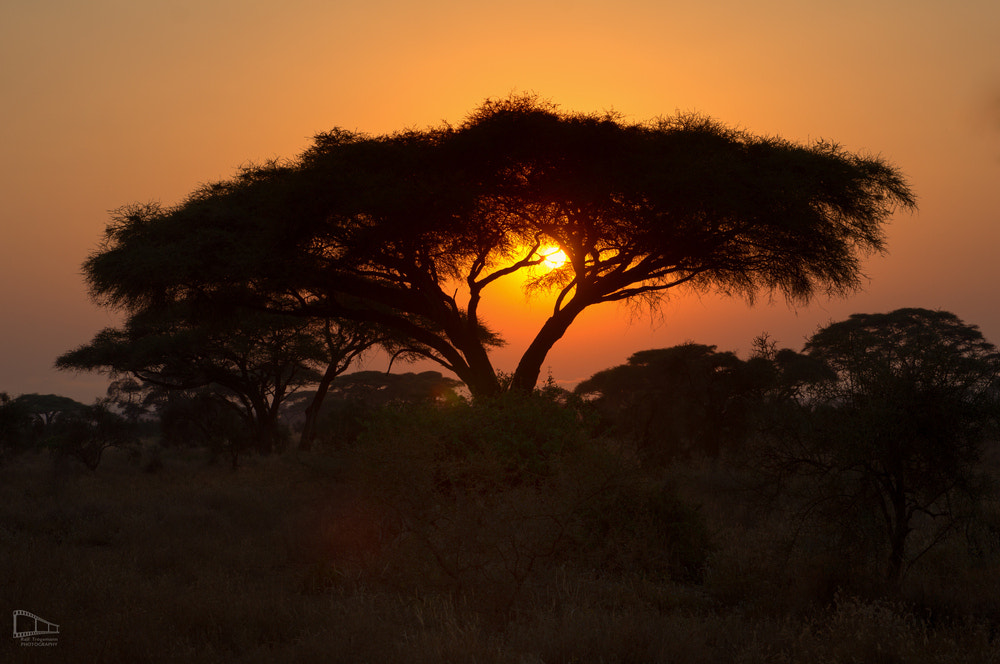 Photograph Sunset over Africa by ArTi Lichtwerk.Photography on 500px