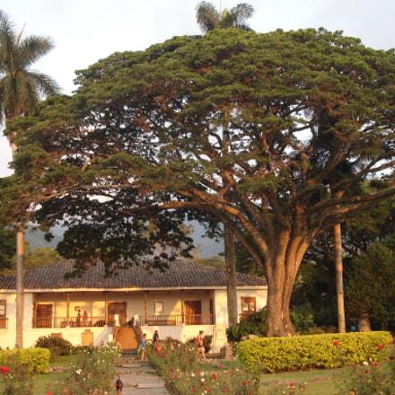 Hacienda El Paraiso, Sony DSC-S600